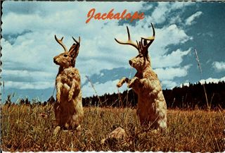 Jackalope-2