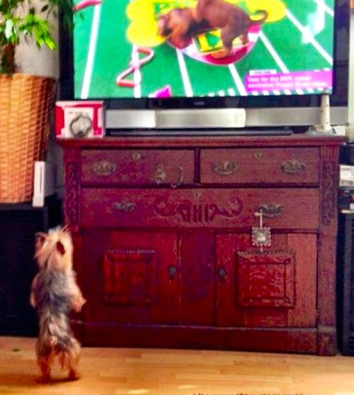 Chloe PUppy Bowl